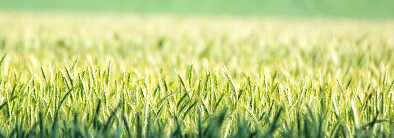 BrochuraELANA-Agrocredit_1280_449